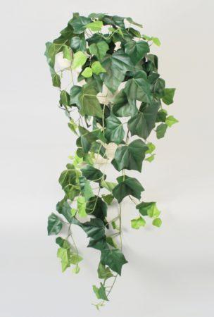 Ivy bush-wine