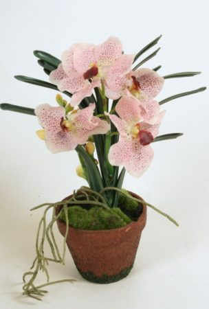 Wanda orkide