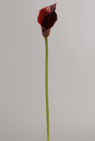 9135-1.jpg