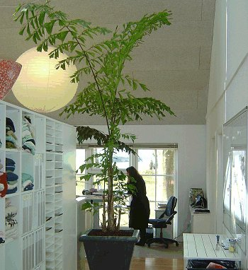 Silkeplanter inspiration